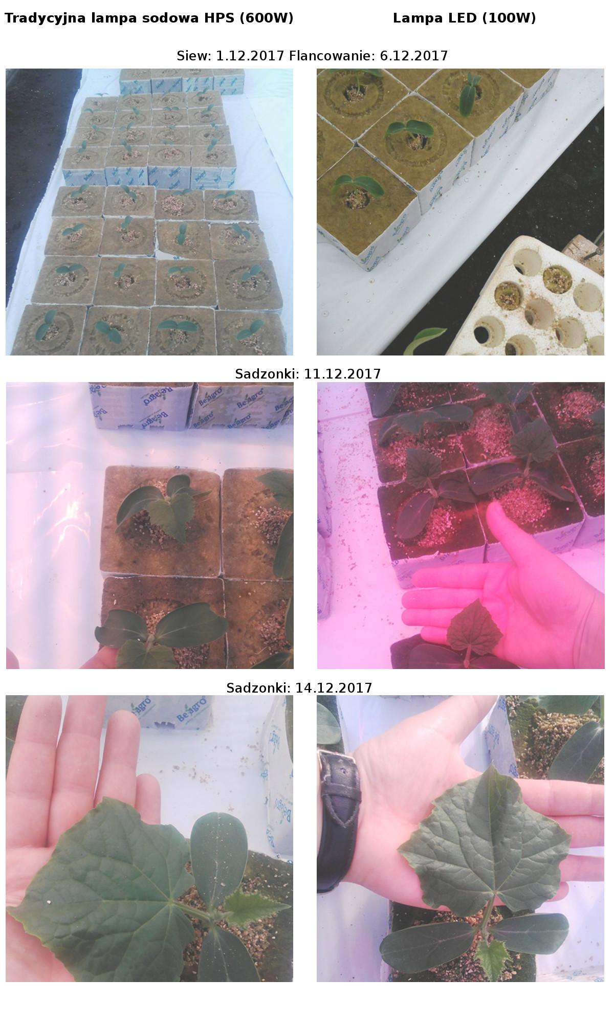 LED Grow Best AGR100 porównanie